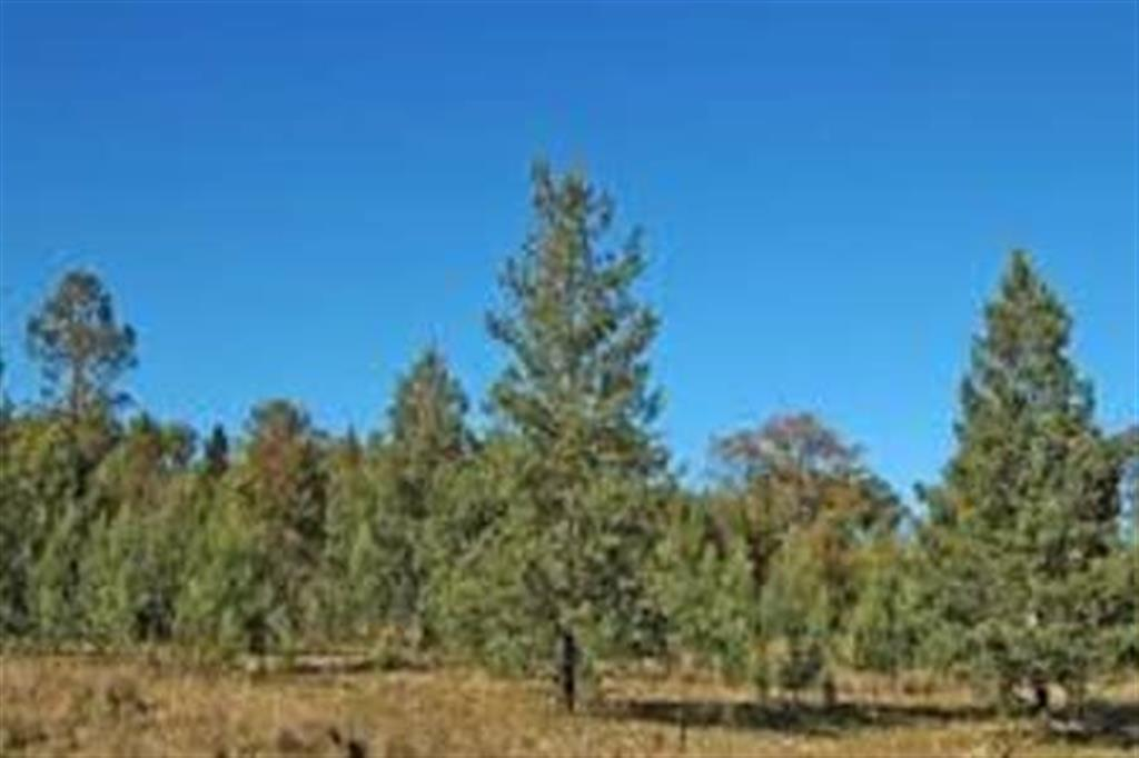 Flinders Ranges Bed and Breakfast - Native Pines