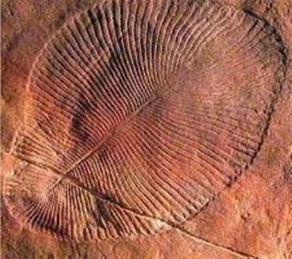 Flinders Ranges Bed and Breakfast - World Heritage Fossils