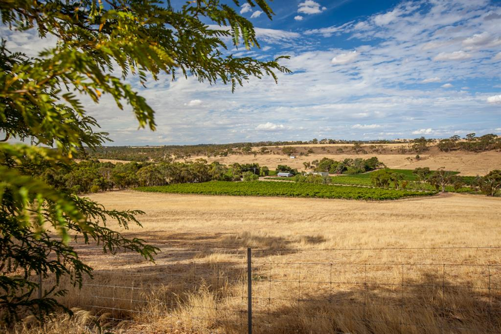 Neagles Retreat Villas - Clare Valley - 5 acres of Riesling vines.