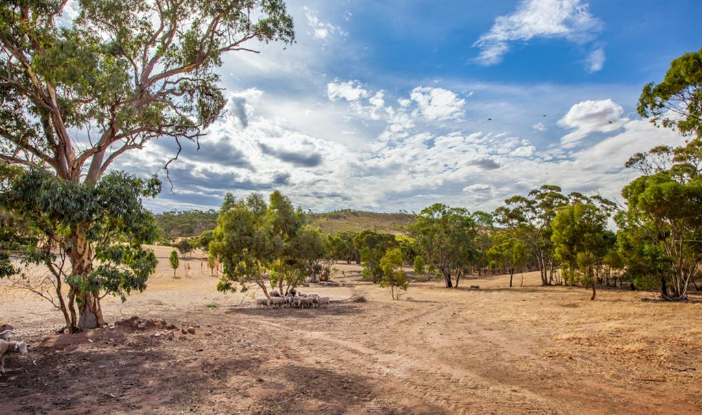Neagles Retreat Villas - Clare Valley - Livestock on the property