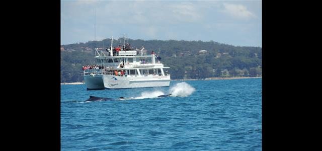 Location - nearby Jervis Bay Whale Watching
