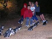 Image of Low Head Penguin Tours.